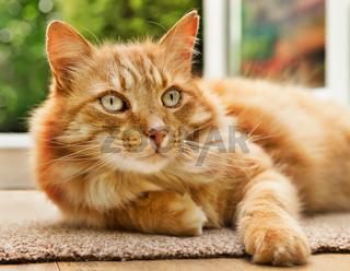 Close-up of a cat lying  next to a patio door