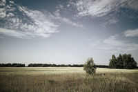 Summer landscape in the field in clear weather.