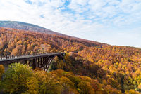 Jogakura Ohashi Bridge Autumn Japan