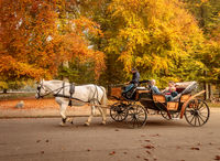 Klampenborg, Denmark - 15 october 2018: White horse with coachman and carriage driving some tourists into the forest in Jaegersborg Dyrehave close to Copenhagen.