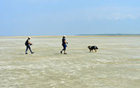 Visitors walking across the mudflats, Wadden Sea National Park, Westerhever, Germany