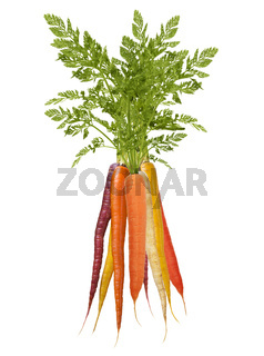 Colorful Rainbow carrots on white background