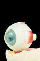 Model human eye on black background