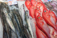 Red bream and other fish for sale at a market in Madrid