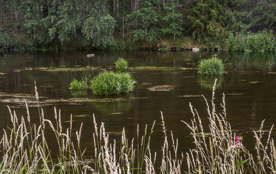 The grasses in the river