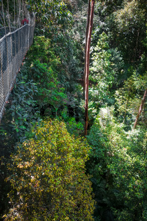 Suspension bridge, Taman Negara national park, Malaysia