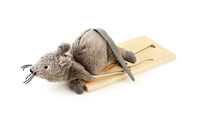 Toy mouse in a mousetrap isolated