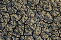Dry cracks, drought