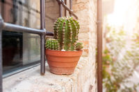 cactus at a window in Italy