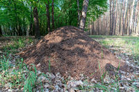close up picture of a giant anthill