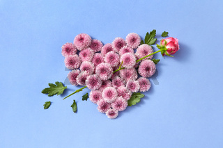 Hardy chrysanthemums heart with rose as an arrow on a pastel background.