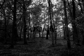 Black and white monochrome woods