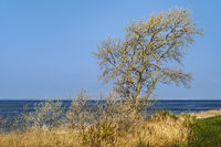 Tree at Schaproder Bodden