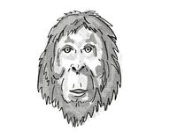 Orangutan Endangered Wildlife Cartoon Retro Drawing