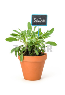 Sage in a clay pot with a german label Salbei