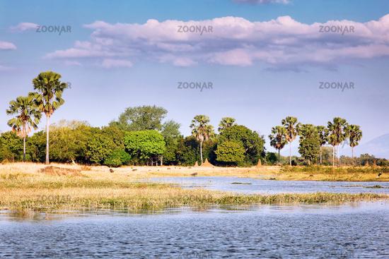 Landscape at Shire River, Liwonde National Park, Malawi