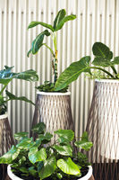Many house plants in pots in the white background
