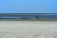 Visitors in the wadden sea at low tide, Schleswig-Holstein Wadden Sea National Park, Westerhever