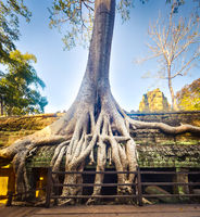 Ta Prohm temple. Siem Reap. Cambodia