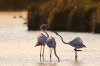 Flamingos  Algarve Portugal