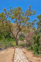 The plane tree of Gortys on Crete