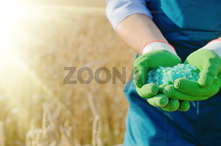 Farmer hold fertilizers in his hands with wheat field at background. Plants care and feeding concept