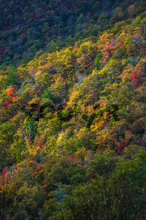 blue ridge and smoky mountains changing color in fall