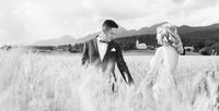 Groom and bride holding hands in wheat field somewhere in Slovenian countryside.