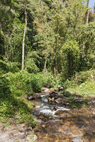 Small stream in Volcan Baru National Park Panama