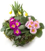 Pflanzschale mit Moos und Frühlingsblumen