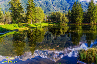 The lake reflected the evergreen spruce