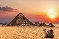The Pyramid of Menkaure at sunset and a camel nearby, Giza, Egypt