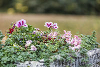 autumn flowers in historical vessel