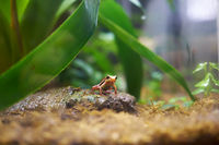 The Hylidae or the tree frog.