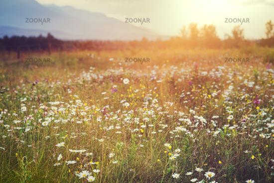 Grassland on sunset