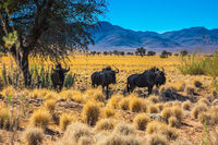 Small herd of wildebeest