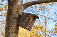 Birdhouse on a tree in autumn park