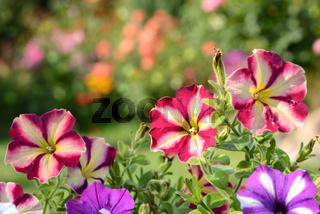 Blumen  648
