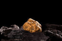 White truffle (tuber magnatum) on black.