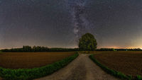 The milkyway over a lonely tree with much copy space.