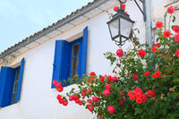 Red roses with blue blinds