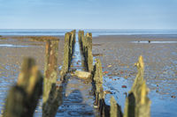 A row of wooden poles on the beach of the North Sea.