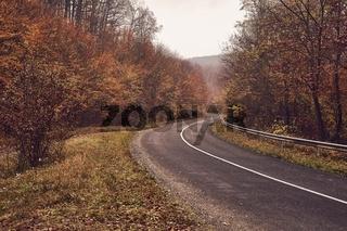 Autumn road through woods
