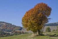 Autumn in the Bondone mountains