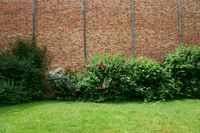 Rose bushes in front of brick facade
