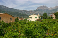 Orangenplantage Mallorca