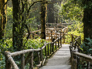 Wooden bridge in Mossy Highlands Tropical Rain Forest in Thailand Mountains. Doi Inthanon National Park.