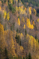 A mountain side covered in colorful autumn trees