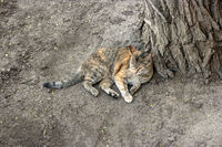 Cat having rest on the ground