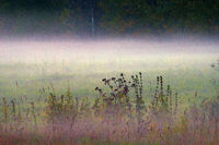 Autumn meadows in the fog